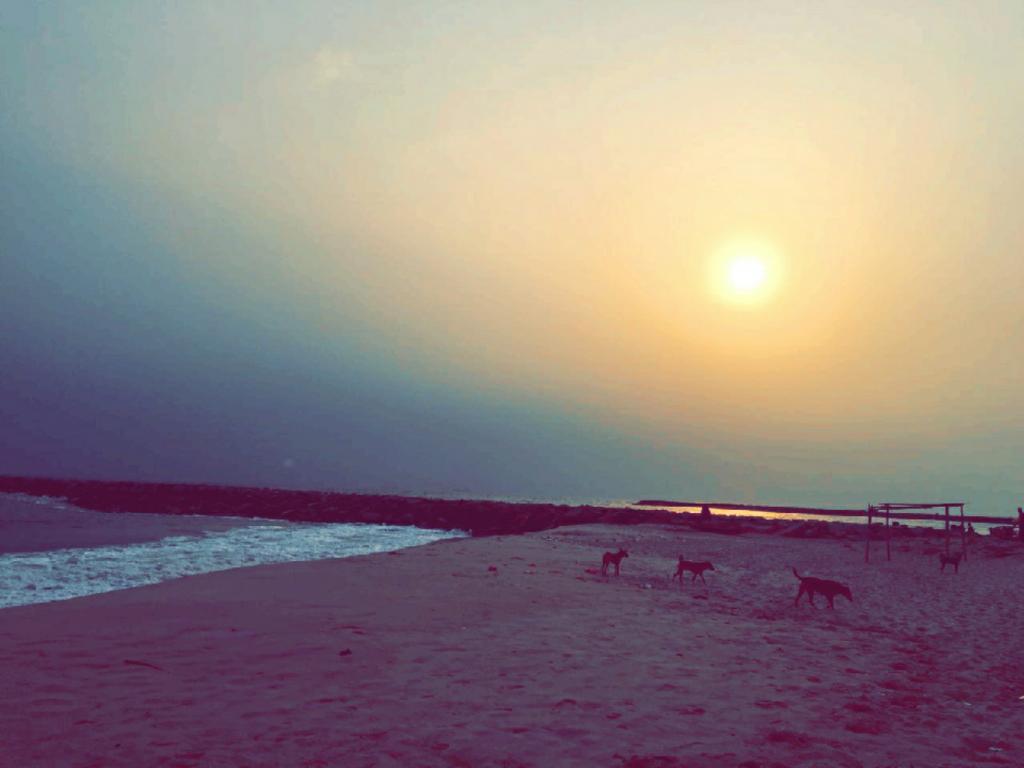 Alpha Beach